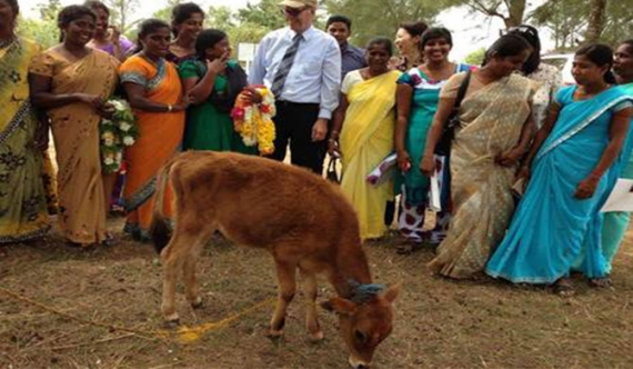 Rural dairy farmers raise production, incomes through usaid assistance