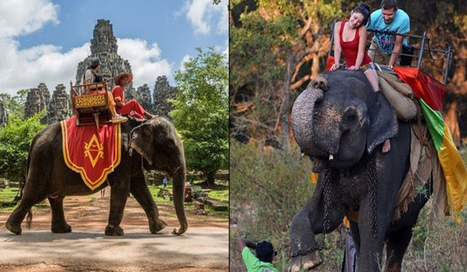 Cambodia to ban elephant rides at Angkor temples