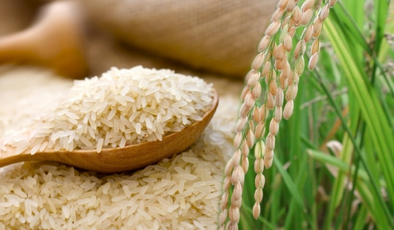 Only organic rice prices remain stable!