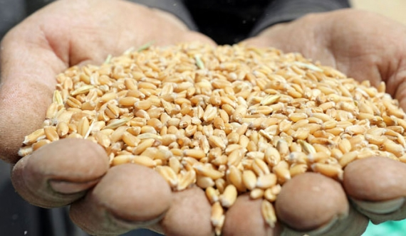 Businessman in trouble for importing 107 wheat containers