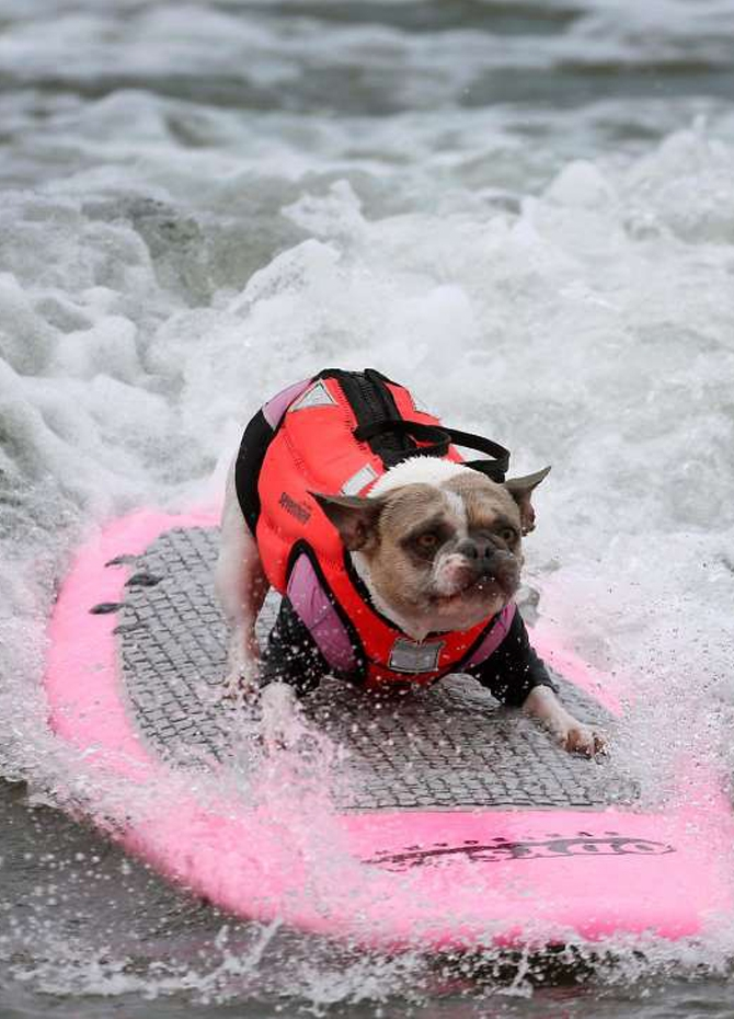 Doggy surfing (video)