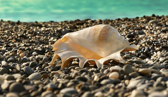 Know the law before collecting seashells