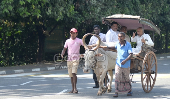 MP sought to drive Dinesh's bullock cart!