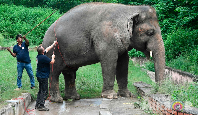 World's loneliest elephant cleared to find new home