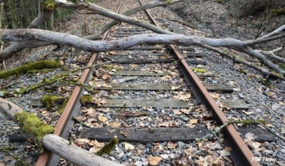 Train services disrupted as trees fall on tracks!