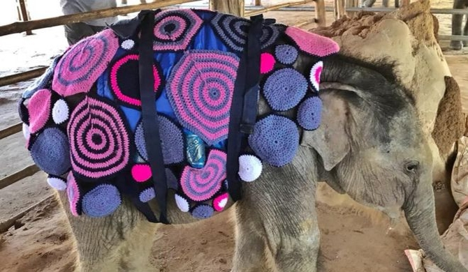 Elephant jumpers (Pics)