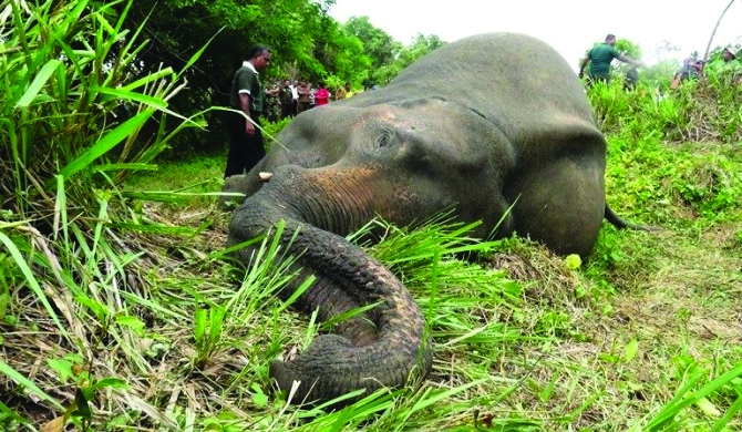 Secret regarding Habarana elephant deaths revealed!