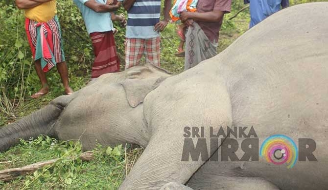 Another wild jumbo shot dead (pics)
