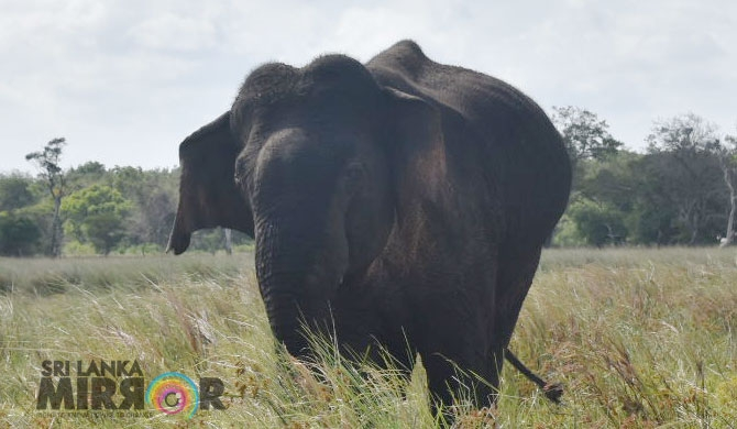 Injured elephant suffers for 6 days with no vet