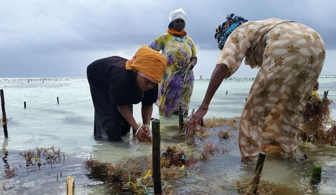 The crop that put women on top in Zanzibar