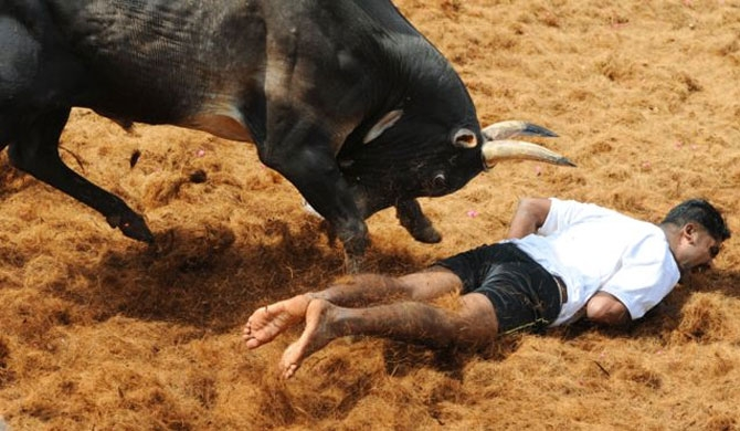 Jallikattu : 3 gored to death in TamilNadu