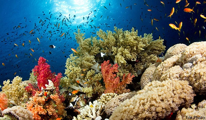 Ninety percent of coral reefs around Sri Lanka dead!