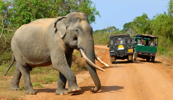 Safari jeeps to Yala increased