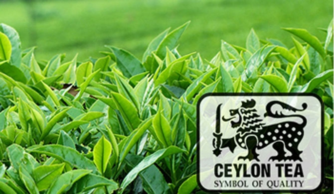 Japan could refuse Ceylon tea too?