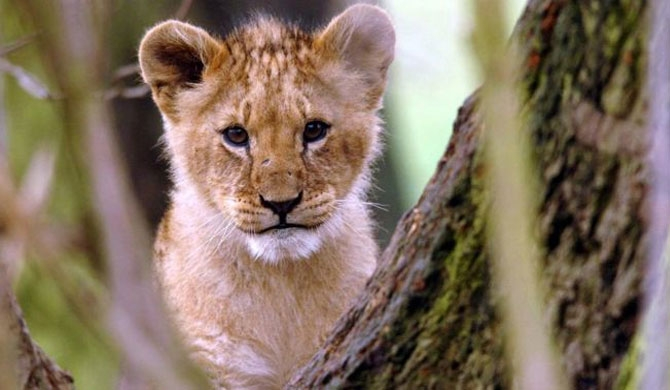 Lion cub found in Paris apartment in France