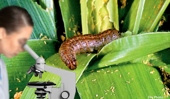 Caterpillar threats to worsen in the future?